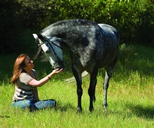 trail horse image