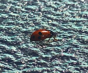black, ladybug, and warm image