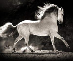 pleasure horse image