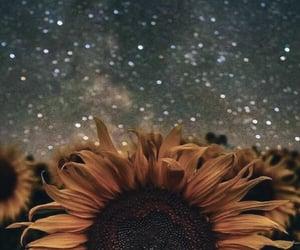 Sunflower Skies 🌻 🌌