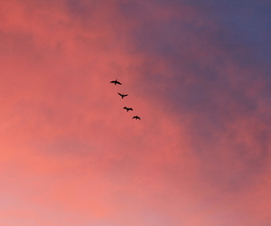 birds, concert, and sky image