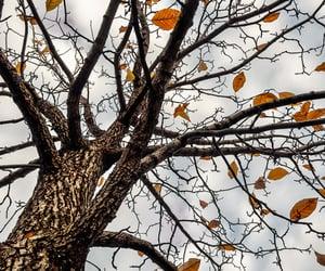 Cool Autumn Breeze