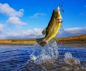 bass, fishing, and bucket mouth image