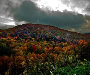 autumn, colors, and colours image