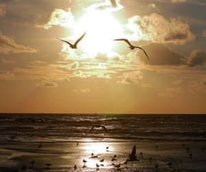 beach, birds, and inspiring image