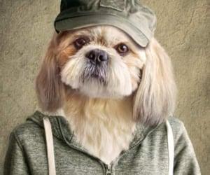 animal, cap, and pet image