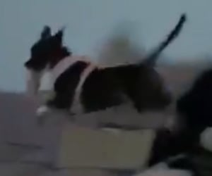 dog, meme, and jumping image