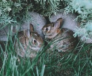 baby animals, bunny, and baby bunny image
