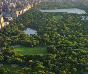 nyc and centralpark image