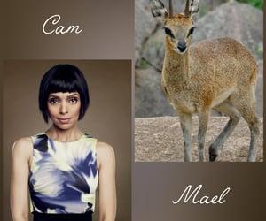 bones, doctor, and cam saroyan image