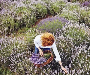 country, countryside, and lavender image