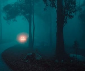 eerie, fog, and forest image