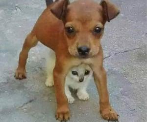 cat, dog, and meme image