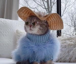 animal, cat, and luxury lifestyle image