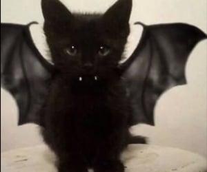 cat, vampire, and black image