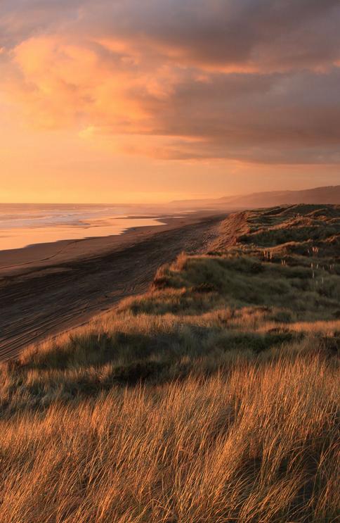 nature, aesthetics, and beach image