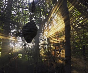 britannia, forest, and celtic image