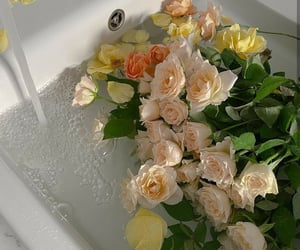 flower, flowers, and roses image