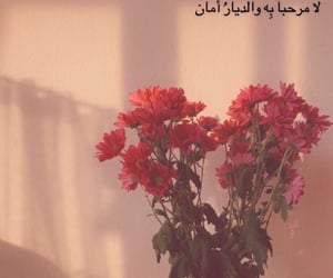 aesthetic, flowers, and wallpapers image