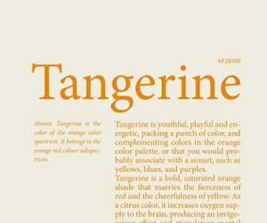 aesthetic, tangerine, and color image