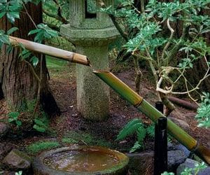 bamboo, flora, and green image