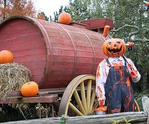 autumn, pumpkins, and hay image