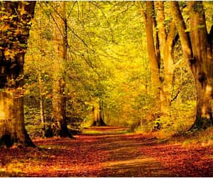 autumn, autumnal, and colors image
