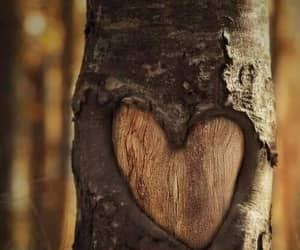 heart, forest, and photography image