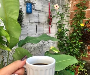 flowers, coffee, and plants image
