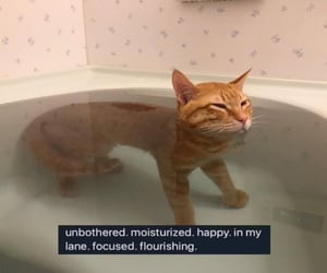 cats, happiness, and meme image