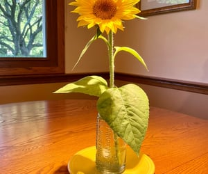 pretty, sunflower, and yellow image