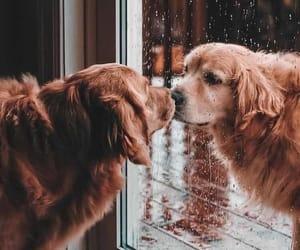 dog, photography, and rain image
