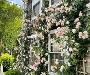 aesthetic, floral, and garden image