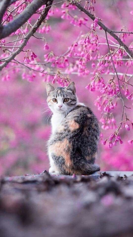 animals, summer, and cat image