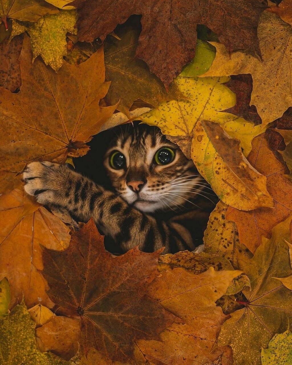 animals and autumn image