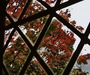 autumn, autumnleaves, and sweaterweather image
