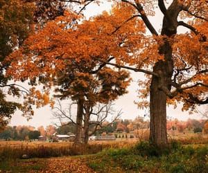 autumn, country, and countryside image
