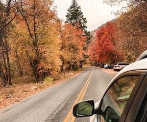 autumn, leafs, and fall image
