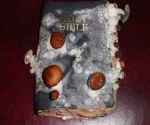 bible, holy bible, and mushroom image
