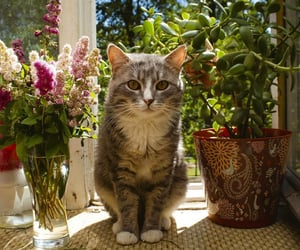 animals, beautiful, and decoration image