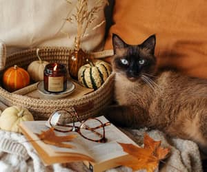 autumn, candle, and cat image
