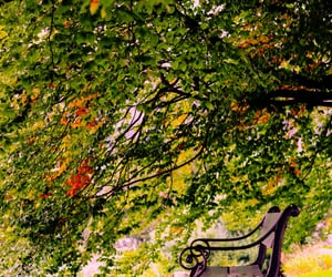 autumn, bergen, and perfection image