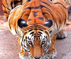 Animales, animals, and naturaleza image
