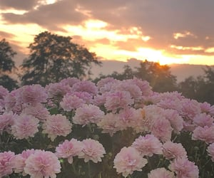 flower, 🌅, and flowers image