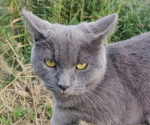 cat cats, green eyes, and grey image