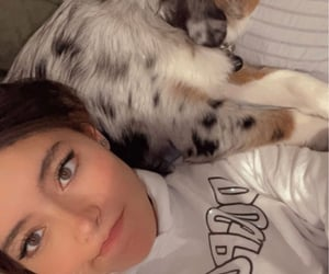dog, rare, and instagram story image