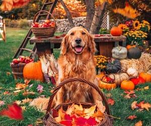 autumn, dog, and pumpkin image