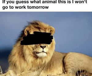 meme, riddle, and dank memes image