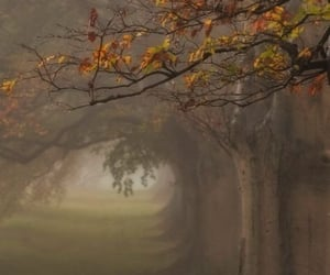autumn, foggy, and trees image