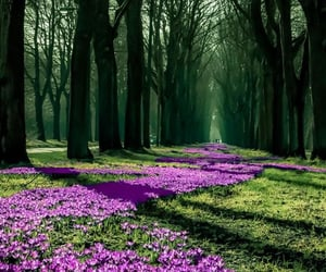 landscape, pink flowers, and green image